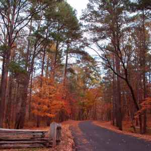 French Camp area: Fall foliage at Jeff Busby Park.