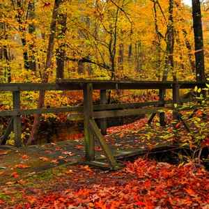 Kosciusko area: Fall Foliage at Myrick Creek.