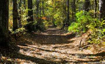 A section of the original Natchez Trace trail.