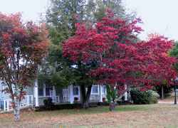 Collinwood, TN - Miss Monetta's Country Cottage