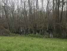 View of Cypress Swamp from the parkway.