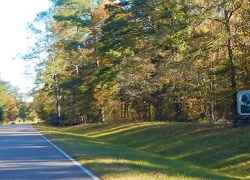 Entering the Tombigbee National Forest near milepost 233.