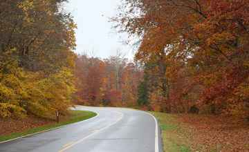 Tennessee - Fall foliage at milepost 363 near Collinwood, TN.