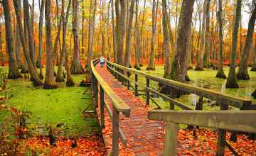 Mississippi - Brilliant orange and yellow fall colors at Cypress Swamp.