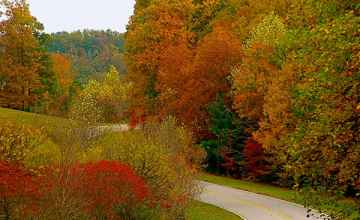 Tennessee - Fall foliage near milepost 423.