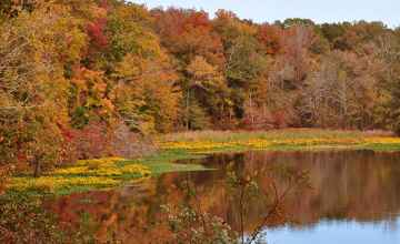 Mississippi - Beautiful fall foliage at River Bend.