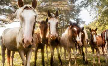 Sacred Way Sanctuary - Indigenouse Horses of the Americas