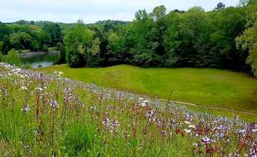 Wildflowers along the Natchez Trace Parkway
