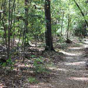 Brashear's Stand and Old Trace Hiking Trail