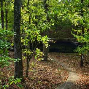Cave Spring - Natchez Trace Parkway